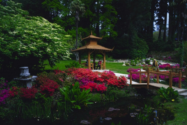 Irish National Stud & Japanese Gardens (Килдэр, Ирландия)